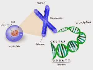 wikirahnama.com-dna-cell